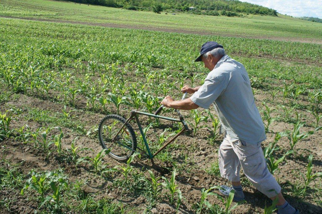 Man som skjuter cykel gframför sig som plog