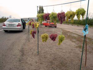 Vindruvor på ställning